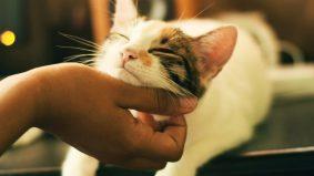 Kenali gerak geri kucing anda