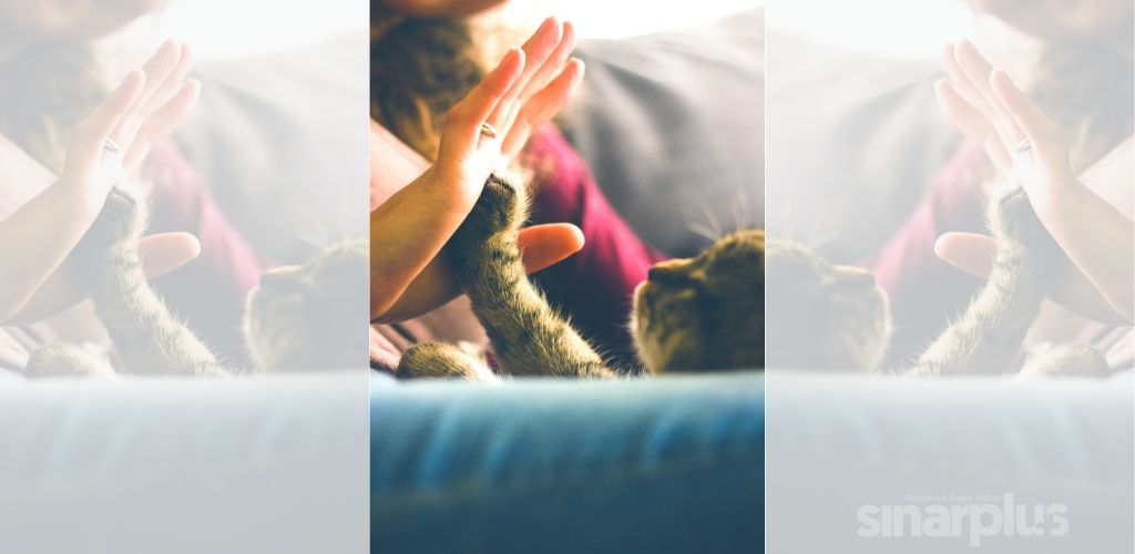kucing covid-19
