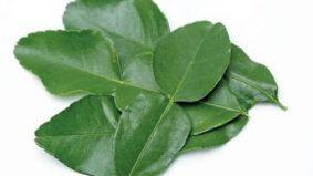 5 khasiat daun limau purut