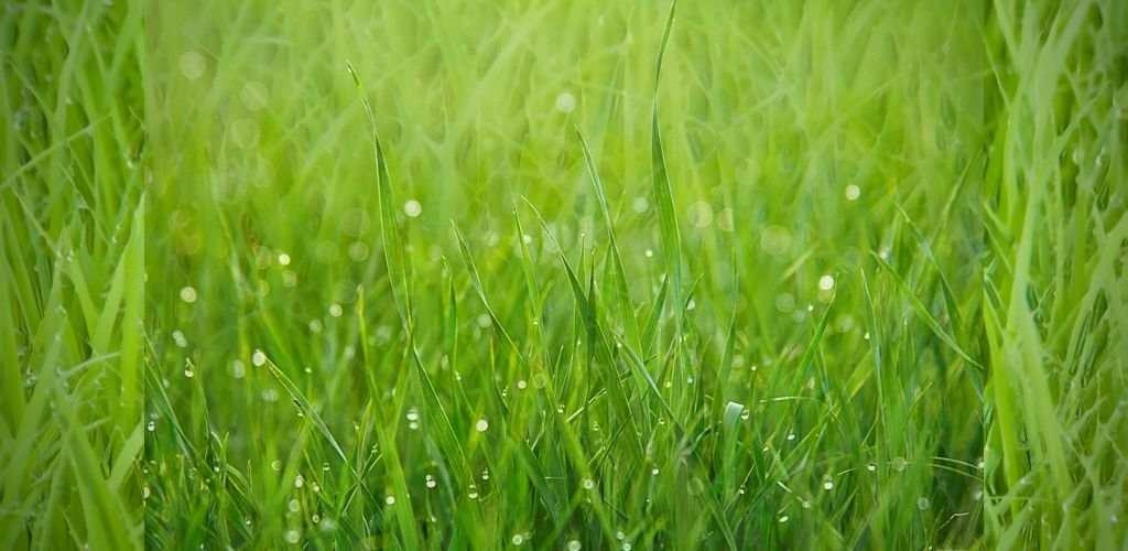tip potong rumput