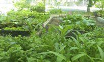 Hikmah PKP: Tanah kosong jadi kebun subur tarik perhatian warganet