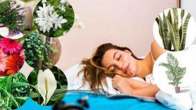 8 jenis pokok untuk 'relaxing time' supaya anda tidur lena dan sihat