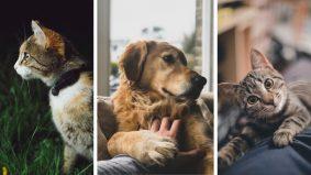Kesiannya kucing, anjing diseksa, dipijak sampai mati. Apalah dosa mereka?