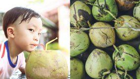 Tip pilih kelapa muda banyak air dan elok isinya