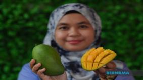 Harumanis Terengganu, manis 'leting'