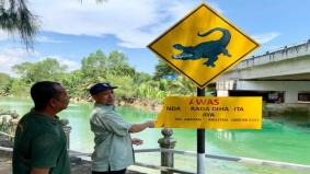 Awas! Ada buaya di Sungai Kesang, airnya cantik tapi bahaya