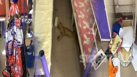 Kucing mati, laptop hilang, bilik diselongkar: Pelajar IPT terkejut lihat bilik yang ditinggal lama sepanjang PKP