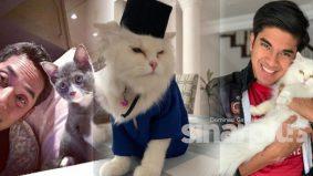 Kajian – lelaki yang sukakan kucing kurang maskulin!