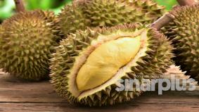 Durian kampung kualiti tinggi patut terima harga logik akal