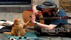 Hidup gelandangan berubah selepas kehadiran kucing jalanan bernama Bob