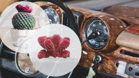 Idea luar biasa penangan Covid-19, dashboard kereta pun jadi taman mini kaktus
