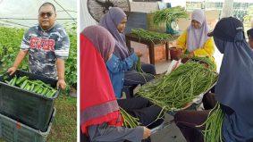 Ramai beralih bidang, coach bisnes ini kongsi 8 tip untuk jadikan pertanian sebagai kerjaya
