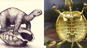 M3 ingatkan bahaya Covid-19 jika bebas di luar rumah, tapi fakta kura-kura pula tarik perhatian