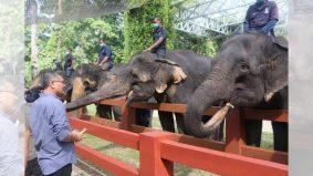 Akhirnya dah boleh jalan-jalan tengok gajah…