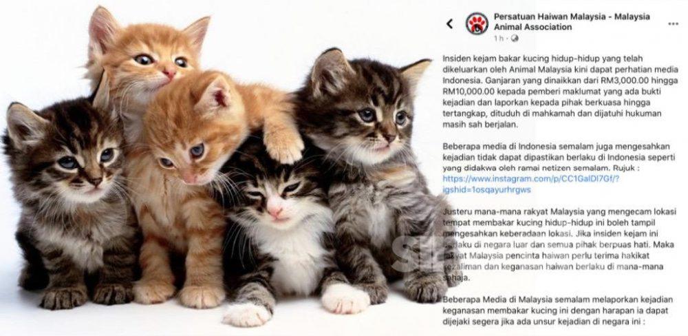 Kejam! Pembunuh kucing diburu, pemberi maklumat bakal terima ganjaran RM10,000