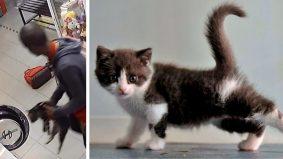 Lagi kejadian kejam… 3 ekor kucing dimasukkan dalam mesin dobi, warganet kecam pelaku