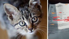 'Kejamnya… bukan seekor, tapi 3 sekali anak kucing dipijak sampai mati'