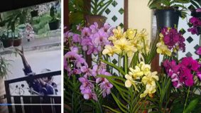 [VIDEO] Hati-hati tanaman di luar rumah, ramai yang tunggu masa je nak 'rembat'