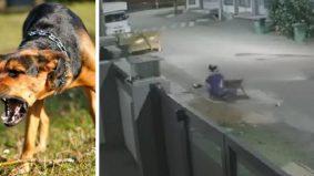 [VIDEO] Abang Kucing cari wanita parah diserang anjing, pemilik turut dijejaki