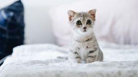 Tak sah jual beli anak kucing yang masih dalam kandungan