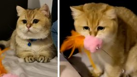 [VIDEO] Si meow pun pandai cemburu, macam ni rupanya bila kucing ada perasaan tu