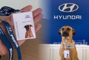Hari-hari datang 'Berjaga', Hyundai lantik seekor anjing jadi pekerja