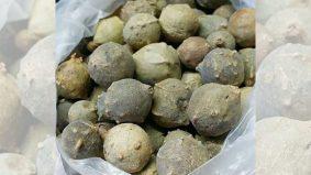 Manjakani bukan sejenis buah, tapi keradangan atau bengkak disebabkan telur yang disuntik serangga
