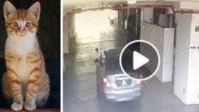 [VIDEO] Lagi kekejaman pada si meow… kali ini kucing sengaja digilis dengan tayar