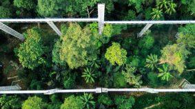 8 perkara yang anda perlu tahu tentang Forest Skywalk