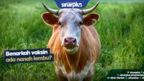 Benarkah vaksin ada nanah lembu?